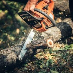 Stubben- und Stammholz